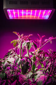 led lights for indoor plants the ultimate guide to the best led grow lights for indoor plants