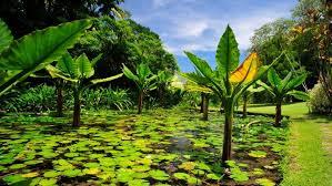 Most Beautiful Gardens In The World World U0027s Most Beautiful Gardens Seychelles U0027 National Botanical
