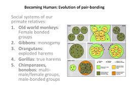 becoming human evolution of pair bonding social systems of our