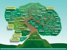 United States Learning Map by Classroom Resources For Plant Based Learning United States