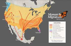 Northern America Map by Monarch Butterfly Migration Journey North Citizen Science