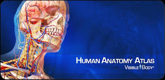 essential anatomy 3 apk netter s atlas of human anatomy v3 0 0 apk free