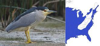 birds of bhi bhic org