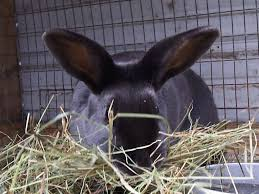 starting a rabbit farm u2013 sample business plan template