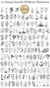 best 25 wildflower tattoo ideas on pinterest delicate tattoo
