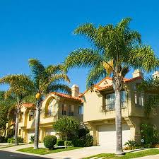 palm tree for sale fast growing trees