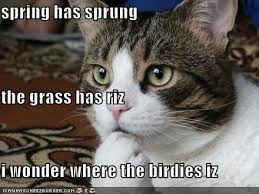 Feeling Sad Meme - spring is here stop feeling sad and move on from the winter blues