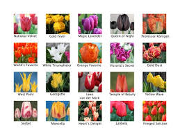 tulip festival at thanksgiving point