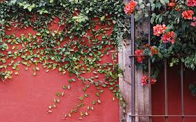 wall flowers wallpaper flowers wall vines leaves hd picture image