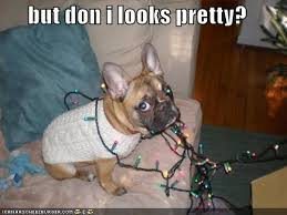 Christmas Dog Meme - i has a hotdog christmas funny dog pictures dog memes puppy