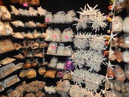 where to buy seashells darlene s shells wholesale seashells and nautical gifts grand