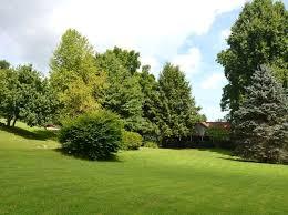 Natural Christmas Tree For Sale - christmas tree farm glenville real estate glenville nc homes