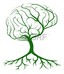 3 243 brain tree stock illustrations cliparts and royalty free