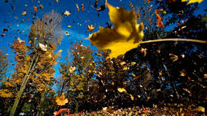 fall themed events to celebrate autumn in toronto ctv toronto news