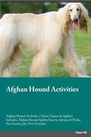 afghan hound dog images afghan hound activities afghan hound activities tricks games
