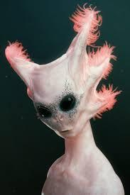 98 best alien faces images on pinterest character design