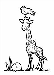 color giraffe newcoloring123