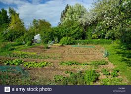 When To Plant Spring Vegetable Garden by Vegetable Garden In Spring Vegetable Beds Small Greenhouse