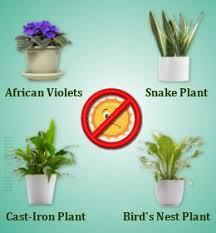 houseplants that need little light dress up your home with these indoor plants that don t need sunlight
