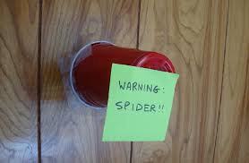 I Tried Killing A Spider - ten ways to kill a spider read this stuff it s good for you