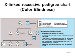 Cause Of Color Blindness Chapter 24 Patterns Of Chromosome Inheritance Ppt Video Online