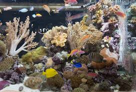 large custom living coral reef saltwater aquariums nyc
