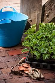 10 gardening ideas for 2017 u2014 seed savers exchange blog