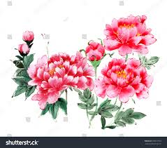 Peony Flowers Traditional Ancient Chinese Hand Painted Peony Stock Illustration