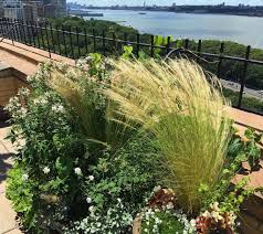 rooftop garden design nyc landscape design and construction drip irrigation outdoor