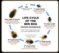 Bed Bugs What To Do What To Do After Your First Bed Bug Treatment Before And During