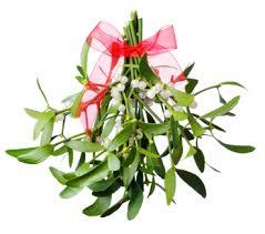 christmas mistletoe mistletoe a christmas tradition flowers org uk
