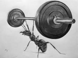 pencil drawing of a weightlifting ant funny sketches ant and