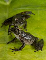 event that wiped out dinosaurs cleared way for frogs
