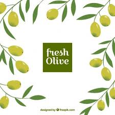 olive vectors photos and psd files free