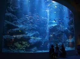 japanese aquarium japan s 5 most beautiful aquariums japan experience