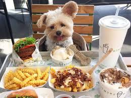 chien cuisine popeye le petit chien qui nous fait découvrir les restaurants de