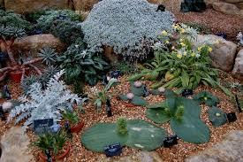 29 december 2009 northumberland alpine gardener u0027s diary