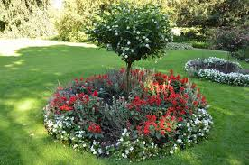 what is a ring garden learn about shrub and tree island beds