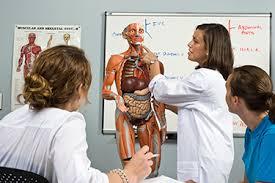 Human Anatomy And Physiology Case Studies Teaching Anatomy And Physiology With Case Studies Teaching Anatomy