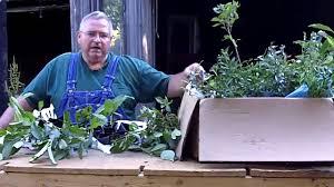 the amazing multiplication effect u0026 healing your plants youtube