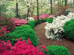 Flower Gardens Wallpapers - garden wallpaper free download pic gallery