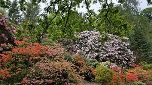 flowering gardens picture of temple newsam leeds tripadvisor