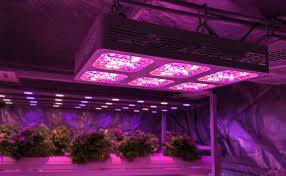 best led grow lights high times 2017 mars hydro 300w led grow light review things you should know before