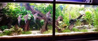 idee deco aquarium aquarium amazonien