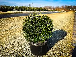 buy trees the tree center