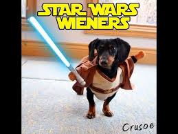 Weiner Dog Meme - star wars wieners crusoe the dachshund plays star wars youtube