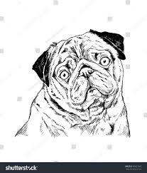 handdrawn sketch pug on white backgroun stock vector 365621603