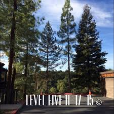 commercial tree care 13 reviews tree services downtown san