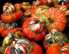 organic heirloom ornamental gourd pumpkin 30 seeds by seedsshop