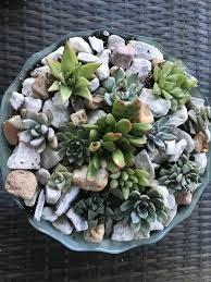 facebook special starter boxes of exact 9 assorted succulents in